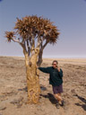 prof. bortenschlager talks about the quiver tree (aloe dichotoma)