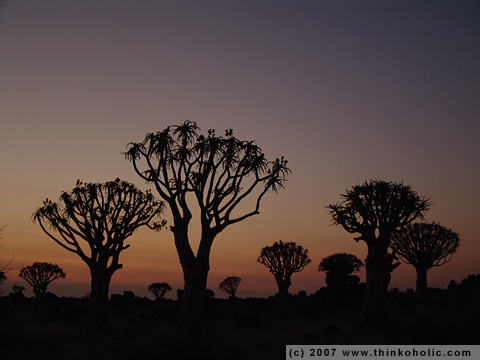 the kokerboom woud (quiver tree forest) at dusk