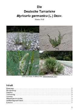 report on myricaria germanica (german tamarisk, deutsche tamariske)