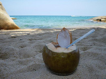 coconut drink at the beach