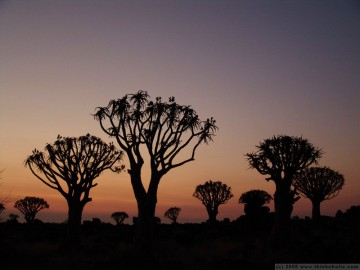 sunset in the kokerboom woud (quiver tree forest), keetmanshoop, namibia