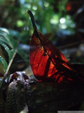 snapshot: backlit leaf on the ground of the rainforest