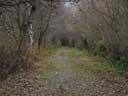 autumnal mood || photo details: 2002-10-01, Sony Cybershot DSC-F505. keywords: autumnal, fall,