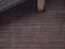 raindrops. 2003-06-06, Sony Cybershot DSC-F505.