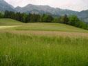 alpine hayfields