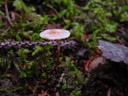 tiny fungus