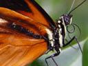 butterfly. 2004-04-13, Sony Cybershot DSC-F717.
