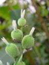 strelitzia fruit (strelitzia sp.)?. 2004-04-13, Sony Cybershot DSC-F717.