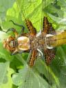 dragonfly. 2004-04-28, Sony Cybershot DSC-F717.