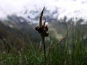 grass bloom. 2004-06-06, Sony Cybershot DSC-F717.