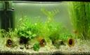 panorama: my aquarium. 2004-06-01, Sony Cybershot DSC-F717.
