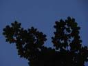 maple leaf silhouette. 2004-06-26, Sony Cybershot DSC-F717.