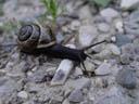 snail. 2004-07-22, Sony Cybershot DSC-F717.