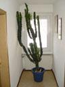 the legendary 'cactus'. 2004-07-25, Sony Cybershot DSC-F717.