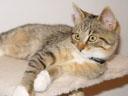 tiger. 2004-07-27, Sony Cybershot DSC-F717.