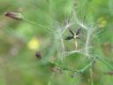 seeds. 2004-08-08, Sony Cybershot DSC-F717.