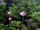 fungus. 2004-09-02, Sony Cybershot DSC-F717.