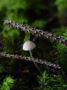 tiny fungus. 2004-09-02, Sony Cybershot DSC-F717.