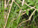 spiderweb. 2004-09-02, Sony Cybershot DSC-F717.