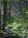 forest track. 2004-09-19, Sony Cybershot DSC-F717.