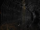 spiderweb. 2004-09-19, Sony Cybershot DSC-F717.