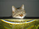 tiger. 2004-12-31, Sony Cybershot DSC-F717.