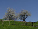 spring scene. 2005-04-22, Sony Cybershot DSC-F717.