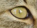 my reflection in tiger's eye. 2005-05-20, Sony Cybershot DSC-F717.