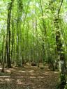 beech forest. 2005-05-22, Sony Cybershot DSC-F717.