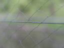 bat-web
