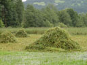reed piles