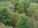 ...trees. 2005-10-07, Sony Cybershot DSC-F717.