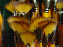 brushes in an artstore