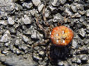 unclassified spider. 2005-10-08, Sony Cybershot DSC-F717.