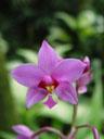 ?. 2005-11-09, Sony Cybershot DSC-F717. keywords: orchid pink