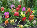 colourful orchid-mix