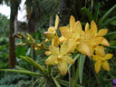 orchid. 2005-11-09, Sony Cybershot DSC-F717.