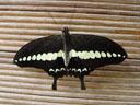 butterfly house, sentosa island. 2005-11-09, Sony Cybershot DSC-F717.