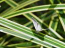 butterfly. 2005-11-11, Sony Cybershot DSC-F717.