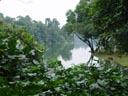 tropical landscape. 2005-11-12, Sony Cybershot DSC-F717.