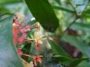 ?. 2005-11-12, Sony Cybershot DSC-F717. keywords: orange, pink, red flower