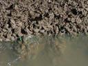 green mussels (perna viridis). 2005-11-13, Sony Cybershot DSC-F717. keywords: mytilidae mussel