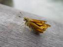 butterfly. 2005-11-14, Sony Cybershot DSC-F717.