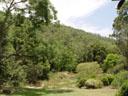 the backyard - dense bush. 2005-11-20, Sony Cybershot DSC-F717.