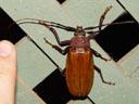 a huge beetle. 2005-11-22, Sony Cybershot DSC-F717.