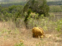 termite mound. 2005-11-25, Sony Cybershot DSC-F717.