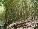bamboo forest. 2005-11-26, Sony Cybershot DSC-F717.