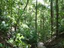 rainforest. 2005-11-26, Sony Cybershot DSC-F717.