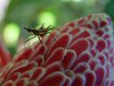 insect. 2005-11-26, Sony Cybershot DSC-F717.