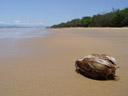 coconut washed ashore. 2005-11-27, Sony Cybershot DSC-F717.
